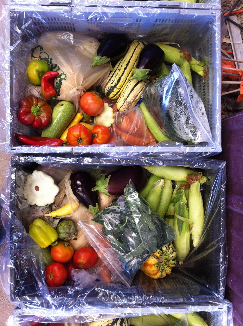 2011 CSA Newsletter – Weeks 14-16/17 – When will you stop giving me all this produce?