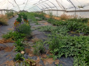 melons, cucumbers and a few overflow flowers, eggplant and peppers