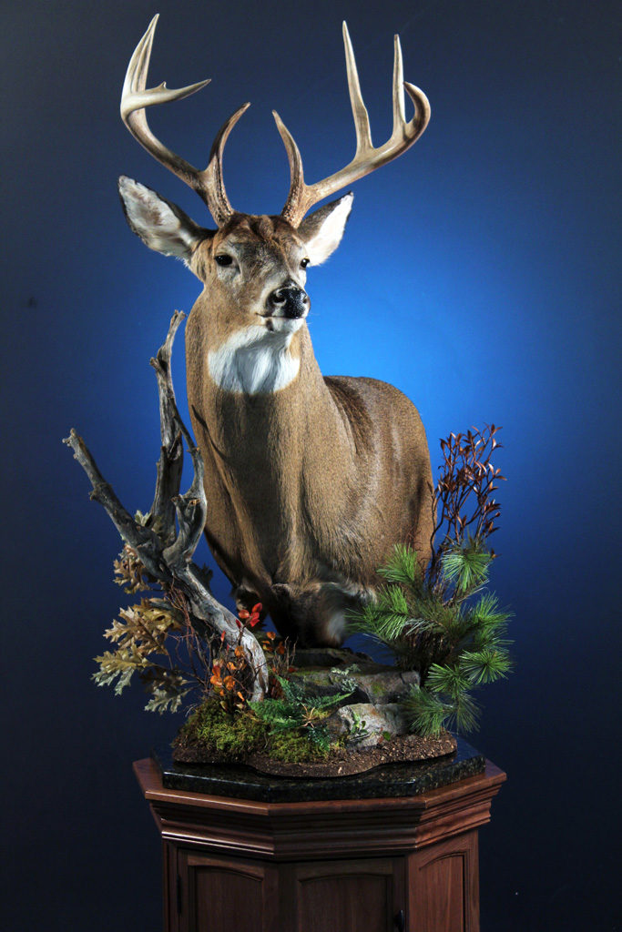 Professional Taxidermy Services East Earl PA Turkey Hill Wildlife