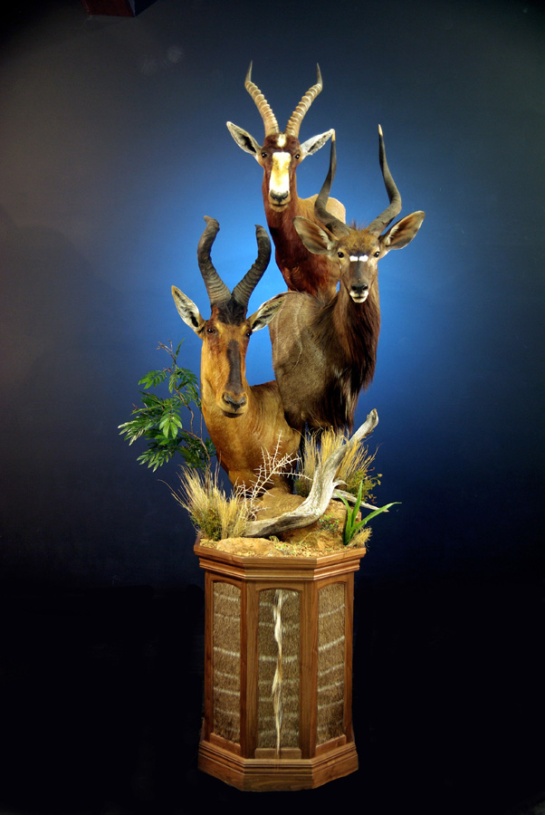 Custom Sculpted Taxidermy  Turkey Hill Wildlife