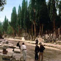 Mezarlığa giden yolda selvi ağaçları