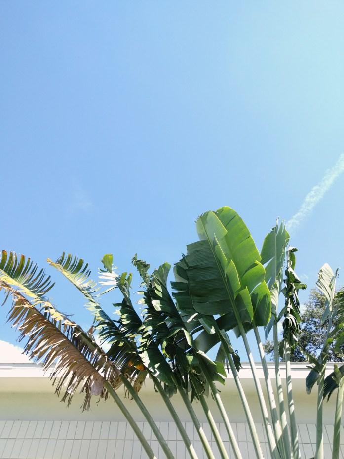 palms in sky