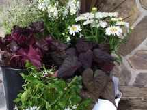 Creative Outdoor Planter Ideas - Turpin Landscaping