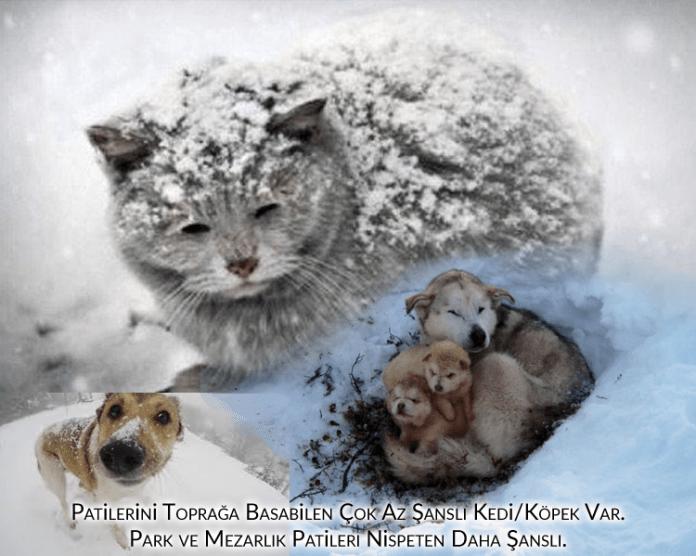 evlerinde kedi ve köpek beslemeyenler, Dokuz canlı