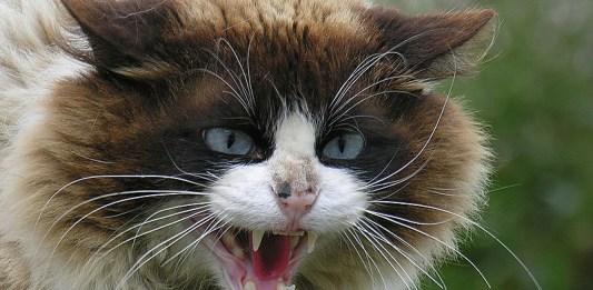 Kuduz bulaşmış kedi, kuduz aşısı önemi