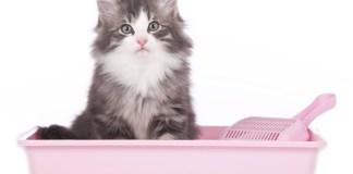 Yavru ve Yetişkin Kedi Tuvalet Eğitimi Nasıl Verilir?