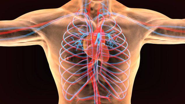 Efectos en el sistema cardiovascular