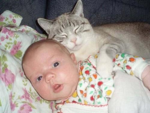 Bebes y gatos