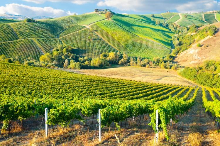 Tra i 7 simboli della Toscana troviamo le colline del Chianti
