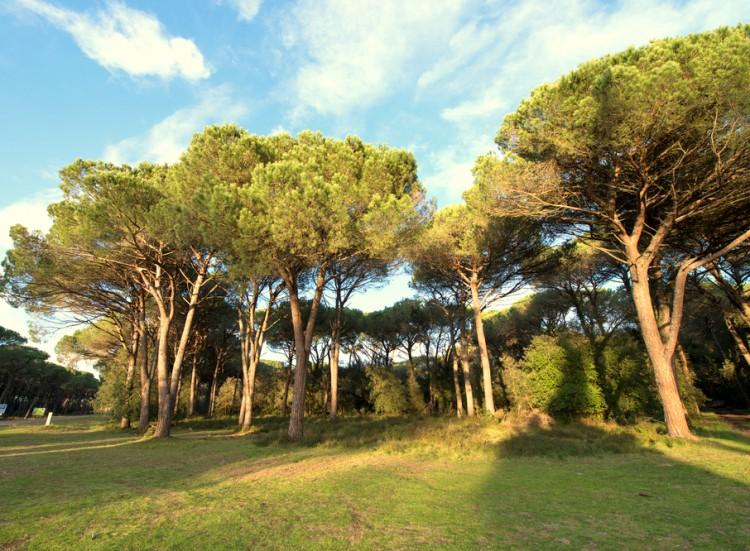 Il Parco Naturale Migliarino, San Rossore e Massaciuccoli è una meta imperdibile per gli amanti di trekking e turismo naturalistico in Toscana.