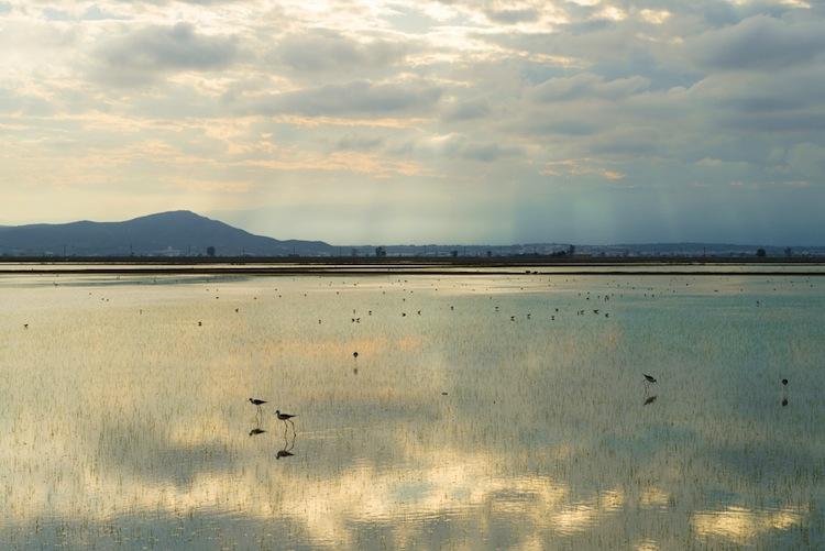 Il Delta dell'Ebro in Catalogna, Spagna, offre paesaggi mozzafiato, una cucina tipica succulenta, un veliero su cui solcare il mare e ostriche a volontà