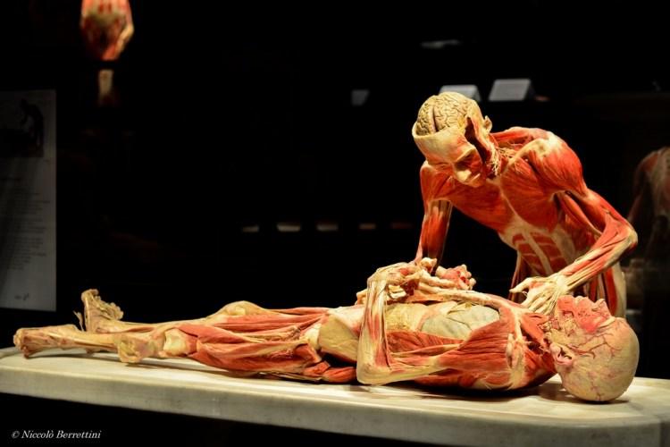 Body Worlds è la mostra di Gunther von Hagens che svela la complessità della vita. Questa edizione, curata dalla Dr.ssa Angelina Whalley, sarà a Firenze fino al 20 marzo 2016.
