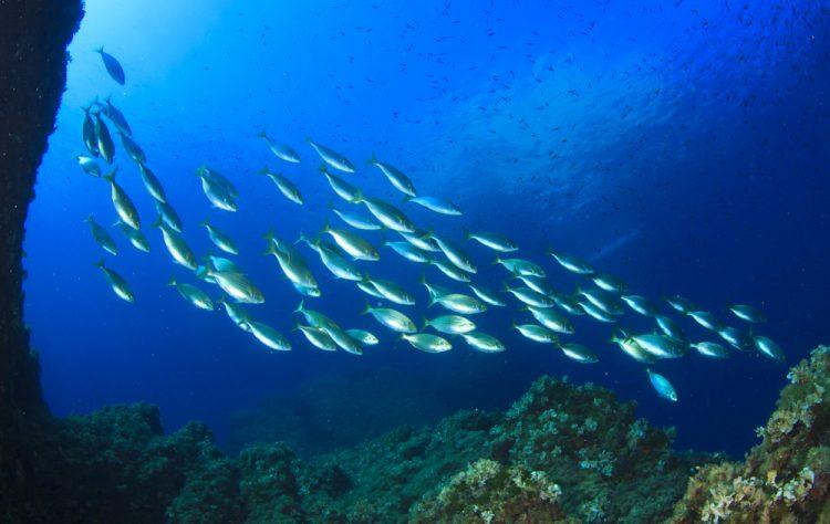 L'Isola della Gorgona nell'Arcipelago Toscano è un'importante riserva marina