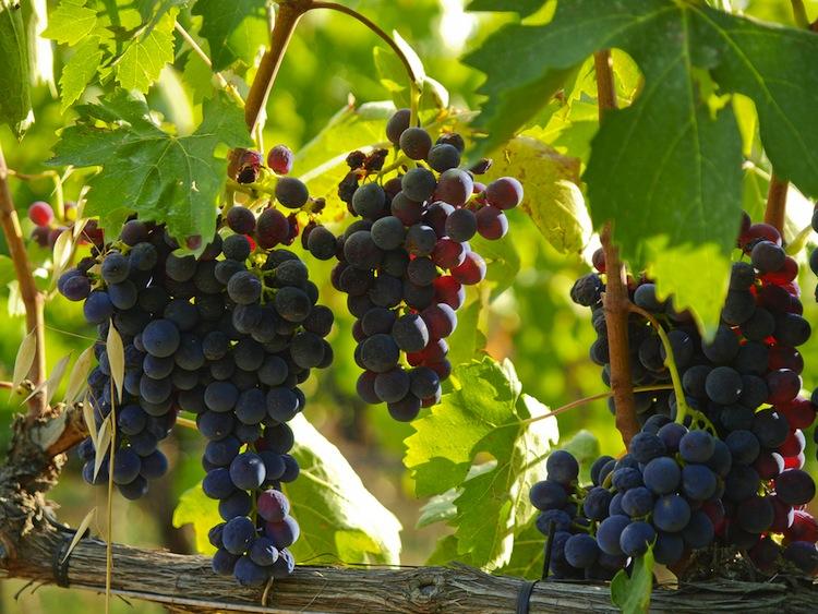 Giacomo Pondini è il presidente del Consorzio del Vino Brunello di Montalcino, vino che quest'anno celebra 50 anni e rappresenta un'eccellenza del made in Tuscany