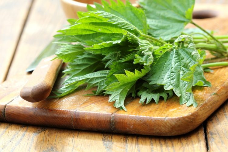 La Zuppa di Aquilea sin dai tempi antichi è chiamata elisir di lunga vita grazie alle proprietà del terreno in cui crescono gli ingredienti