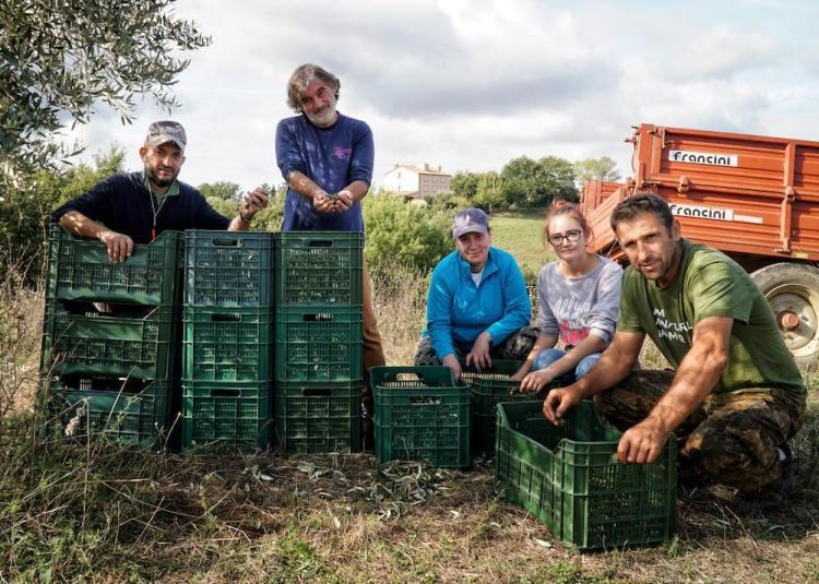 Il team della Fattoria La Maliosa durante la raccolta delle olive