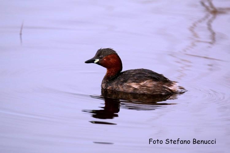 Fauna degli Orti nell'Oasi del WWF vicino a Piombino