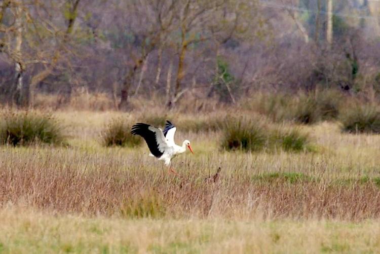 Fauna del Bottagone nell'Oasi del WWF vicino a Piombino