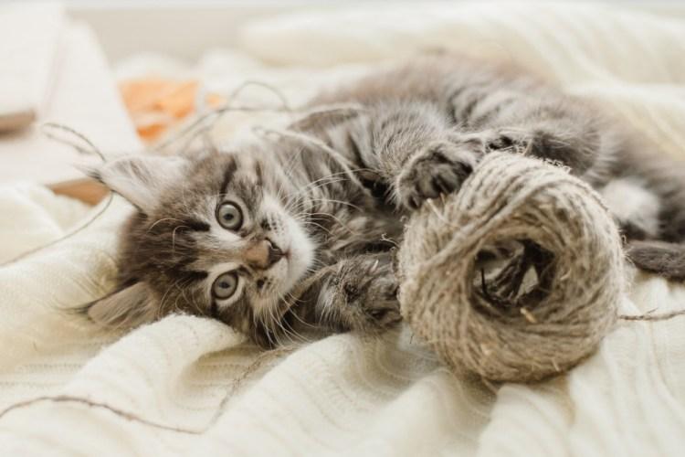 Gatto cucciolo gioca con un gomitolo di lana