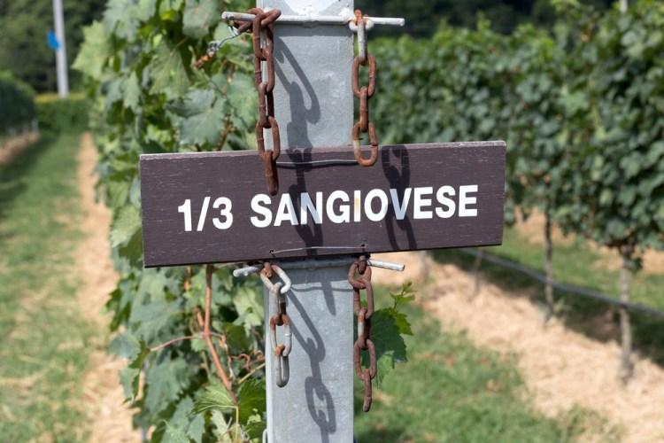 Vigne di Sangiovese in Toscana