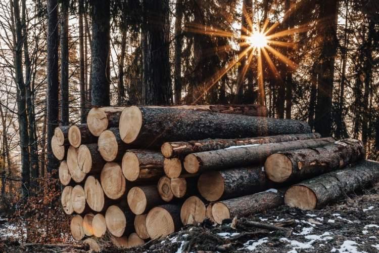 Legna tagliata in un bosco al tramonto