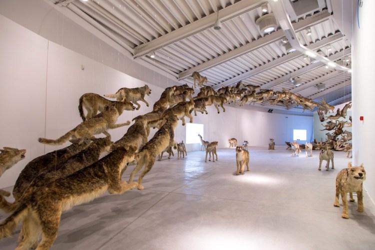 I Lupi dell'esposizione La Fine del Mondo al Centro Luigi Pecci di Prato