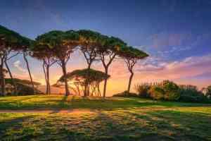 Pini al tramonto nel Golfo di Baratti, località della Costa degli Etruschi in Toscana