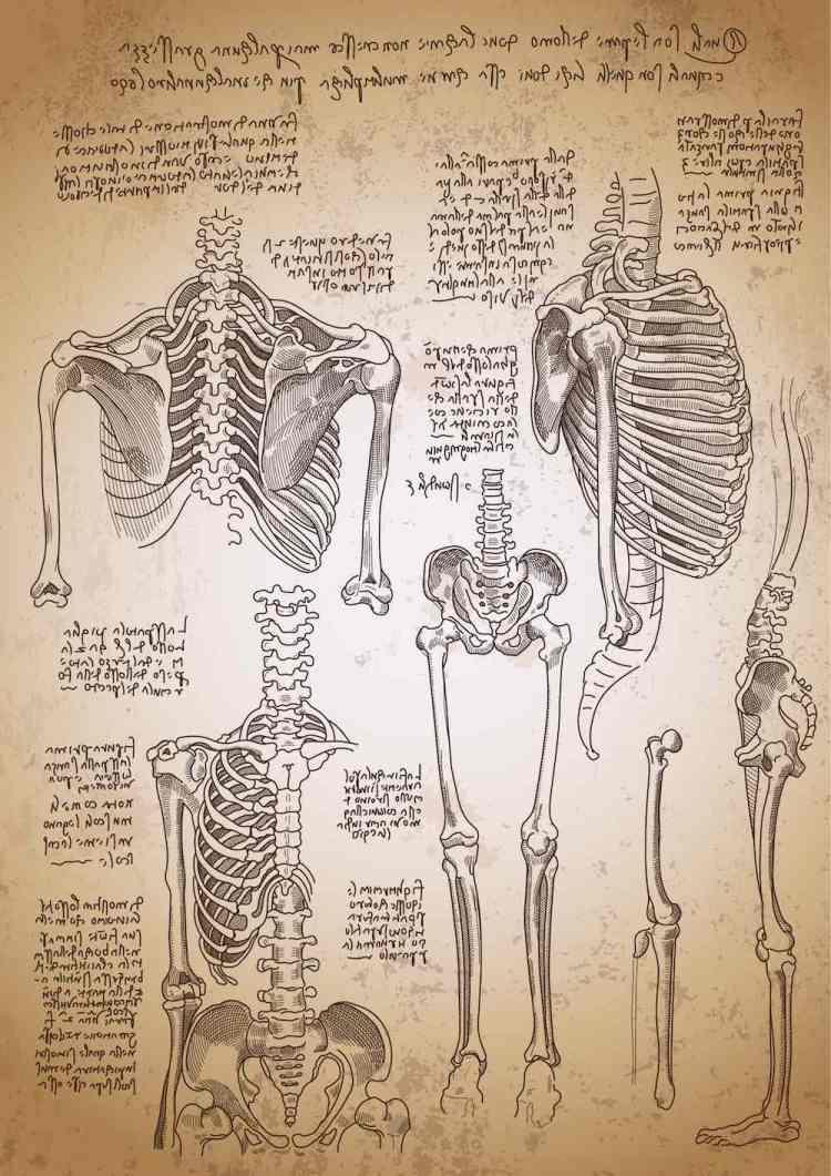 Copia degli schizzi anatomici di Leonardo sullo scheletro umano