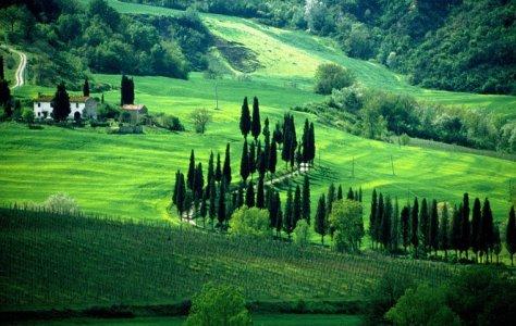 Chianti near Florence