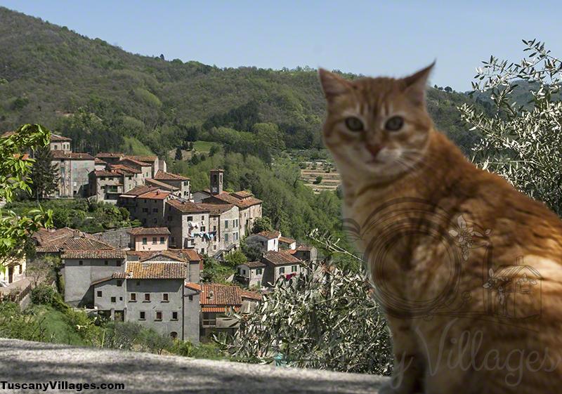 cat and castelvecchio 5
