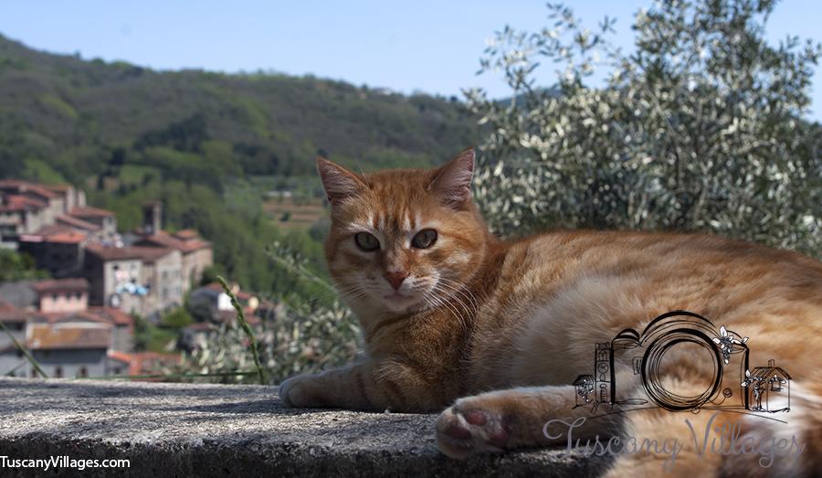 cat and castelvecchio