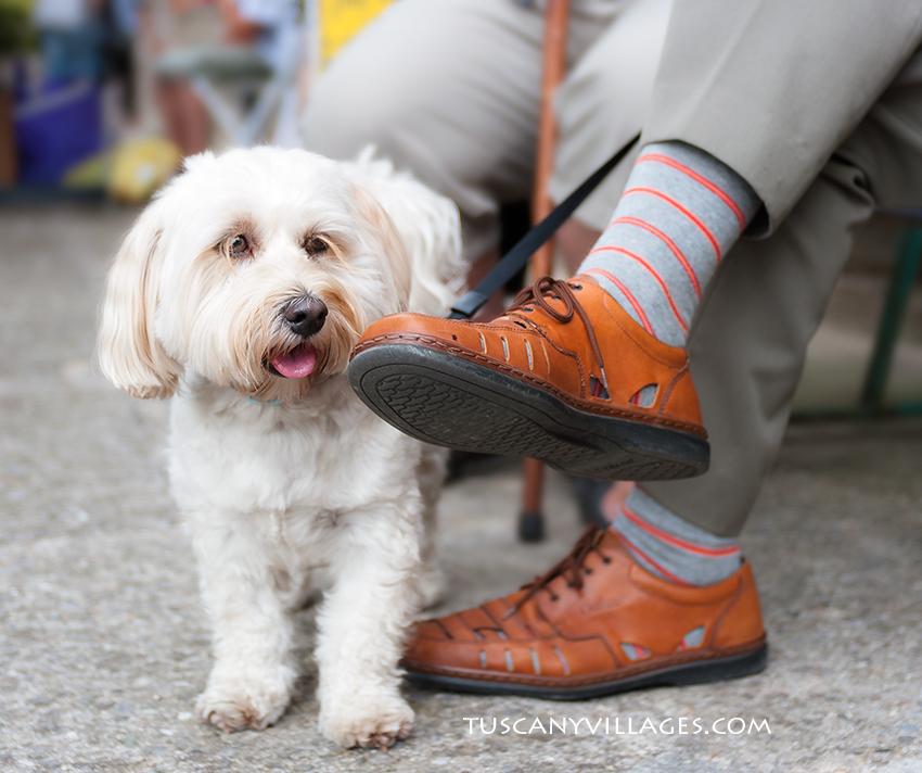 Dog and shoe