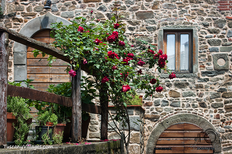 Roses in Sorana, Pescia