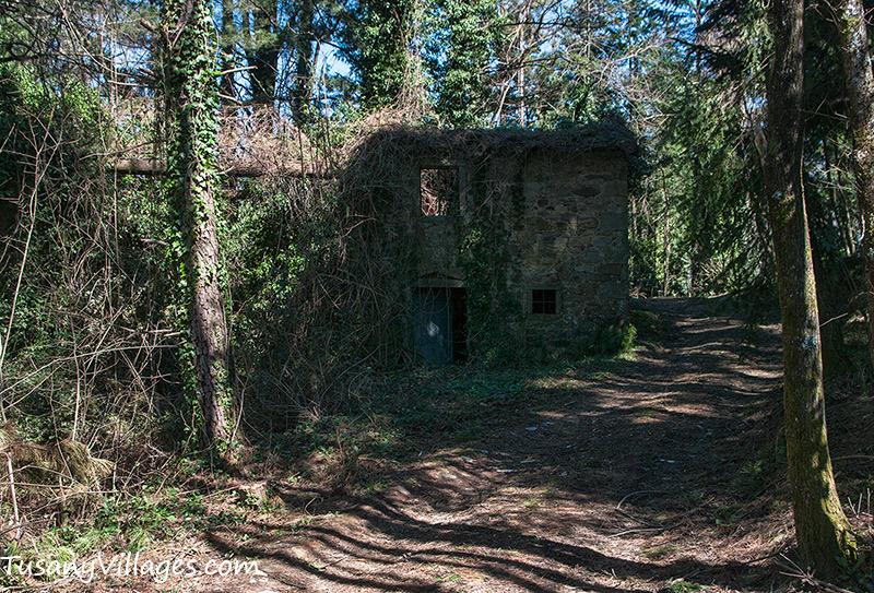 Woodland Cottage, Aramo, Pescia