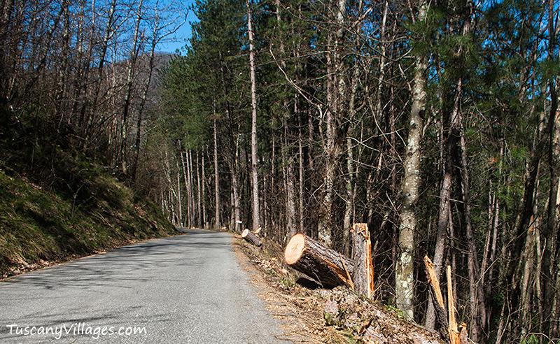 road leading out of Aramo, Pescia