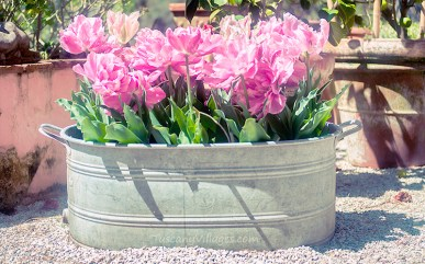 Flowers in old tin bath Tuscany
