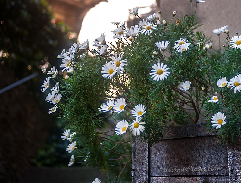 whitel-flowers