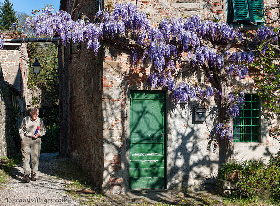 Village of Collodi with wisteria