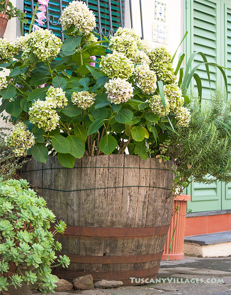 green-flowers-and-door fibbialla