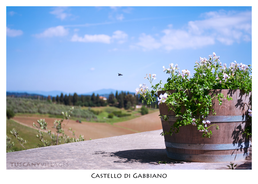 flowers-bee-plant-tuscany