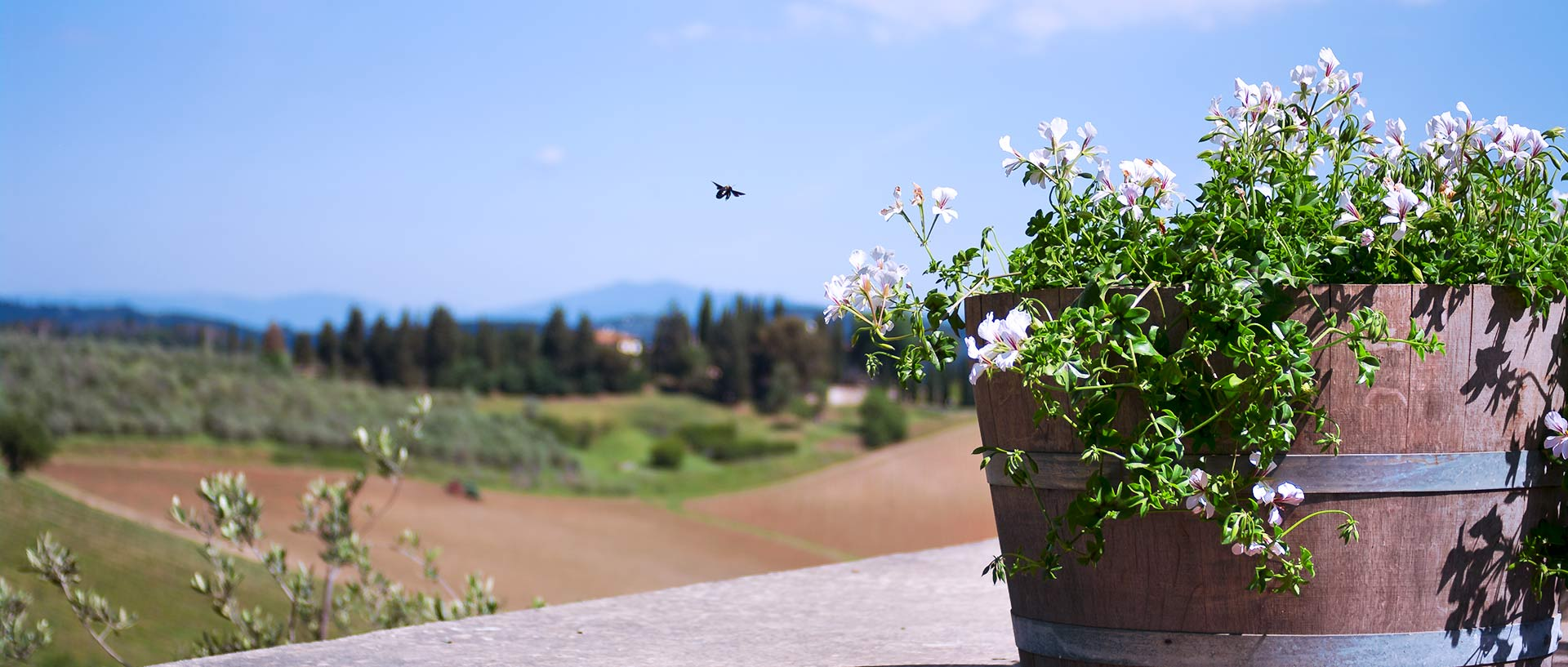flowers and bee in Sienna, tuscany