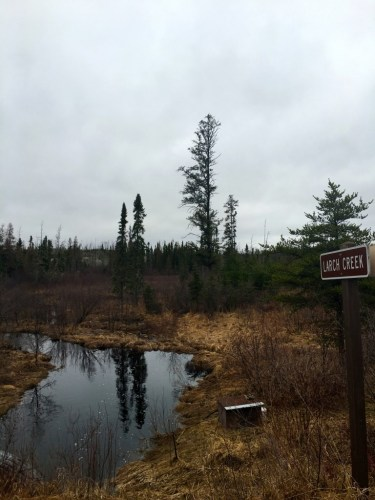 Larch Creek Boundary Waters Entry Point Spring 2016