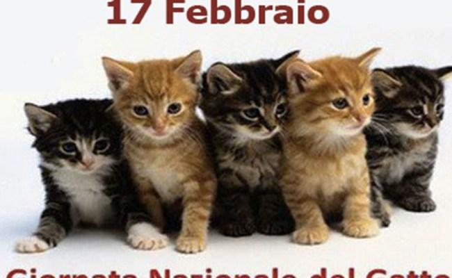 Festa Nazionale Del Gatto Il 17 Febbraio Tuscia Up Il