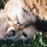 mascotas felices