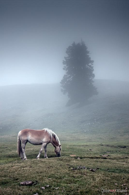 Природа от Marius Sabo