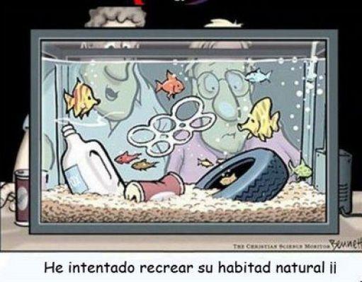 habitat natural peces