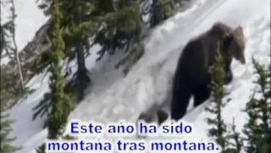 Photo of Este año ha sido, montaña tras montaña – Roger Osorio – #musicacristiana #diadelseñor