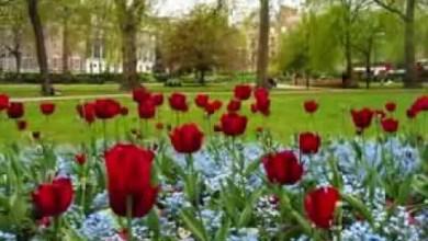 Photo of Video: Jardin De Rosas – Annette Moreno