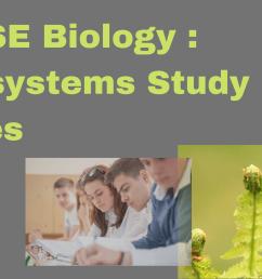IGCSE Biology : Ecosystems Study Notes - Tutopiya [ 1080 x 1920 Pixel ]