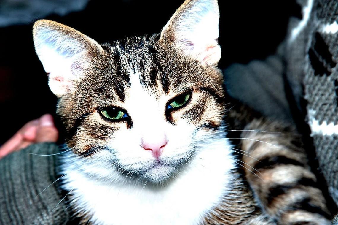 Il gatto Kikko contrastato